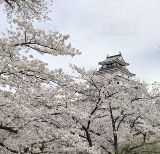 空,桜,城,鶴ヶ城,しろ
