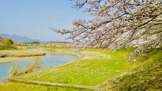 自然,春,桜,川,花見,景色,さくら