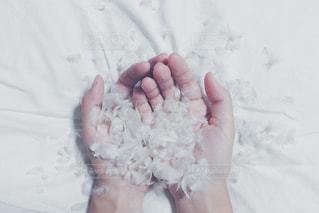 冬,ピンク,白,手,優しい,シーツ,幸せ,羽,ウエディング,フィルム,winter,ホワイト,冷たい,寂しい,包み込む