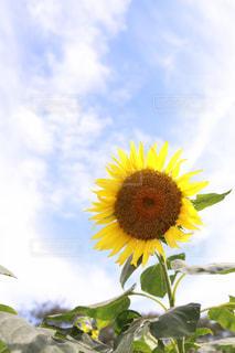 自然,空,夏,植物,晴れ,青空,黄色,日差し,鮮やか,黄色い花,イエロー,色,千葉県,草木,yellow