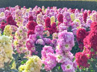 近くの花のアップの写真・画像素材[1826025]