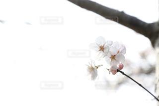 近くの花のアップの写真・画像素材[1833019]