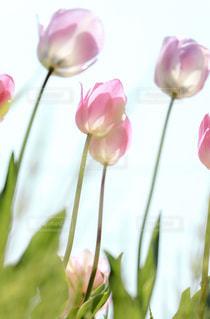 近くの花のアップの写真・画像素材[1919055]