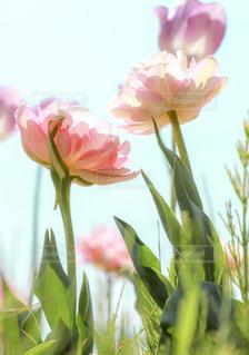 ピンクの花で一杯の花瓶の写真・画像素材[1919116]