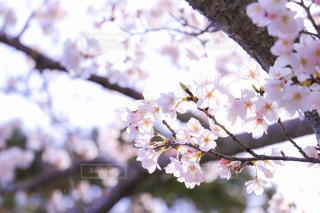 近くの木からぶら下がっている花のアップの写真・画像素材[1926039]