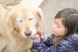 犬の写真・画像素材[2010717]