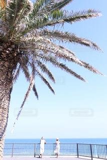 海,夏,屋外,ワンピース,晴天,後ろ姿,タンクトップ,海岸,人物,麦わら帽子,人,浜辺,後姿,夫婦,ヤシの木,勝浦,真夏日,老夫婦,炎天下