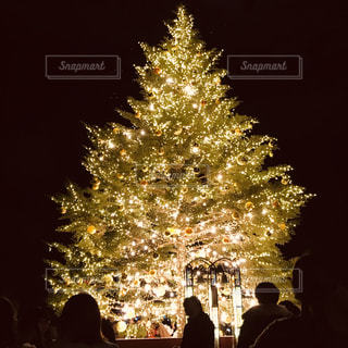 冬,屋外,黄色,ネオン,樹木,クリスマス,クリスマスツリー,みなとみらい
