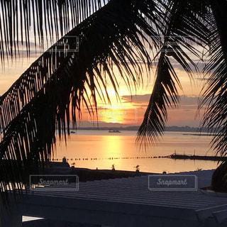 海,ビーチ,旅行,旅,ヤシの木,南の島,サンセット,海外旅行,セブ島