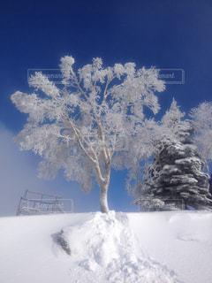 雪景色,スキー,ホワイト,樹氷,スノー