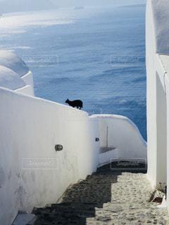 海,動物,海外,白,島,ねこ,路地,ギリシャ,黒猫,ホワイト,コントラスト,サントリー二島