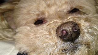 犬,動物,ペット,寝顔,生き物,dog,表情,寝ぼけ