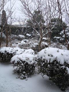 冬,雪,庭,銀世界,師走