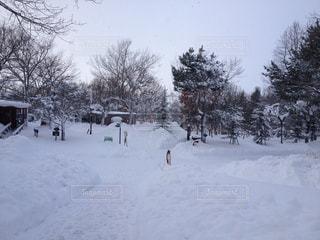 動物,雪,屋外,雪景色,旅行,旭山動物園