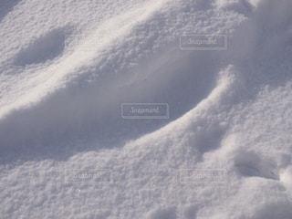 雪,足跡,旅行,旭山動物園,レジャー・趣味