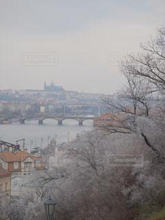 女性,風景,冬,雪,白,景色,プラハ,チェコ,ホワイト,20歳
