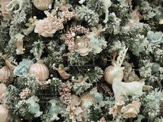 女性,雪,白,ヨーロッパ,クリスマス,ツリー,クリスマスツリー,ホワイト,20歳,クリスマスマーケット