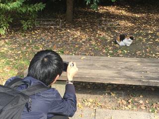 猫,公園,秋,屋外,ピクニック,人物,人