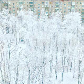 雪,樹木,樹氷,ロシア,モスクワ,マイナス,北国,厳冬,レニンスキー,団地の中庭