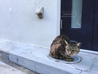 猫,動物,白,ねこ,壁,1匹,お散歩,路地裏,インスタ映え