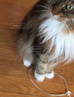 とりあえず、ヒモの輪に足を入れとく猫の写真・画像素材[1802795]