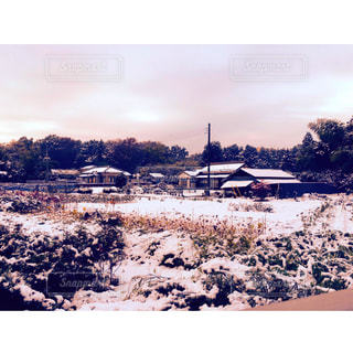 自然,風景,空,冬,雪,屋外,埼玉,ホワイト
