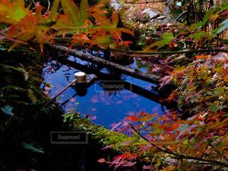 近くの木のアップの写真・画像素材[1667584]