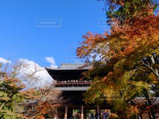 建物の前にツリーの写真・画像素材[1667591]