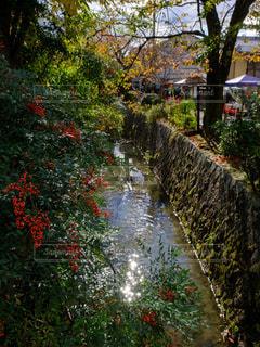 バック グラウンドで市と川の写真・画像素材[1667592]
