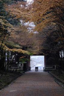 ツリーの横にある空の公園ベンチの写真・画像素材[1667612]