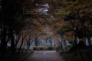 道の真ん中にツリーの写真・画像素材[1667620]