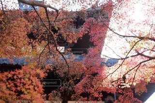 木の枝に花の花瓶の写真・画像素材[1667661]