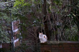 白いレンガの壁の上に座っている猫の写真・画像素材[1667680]