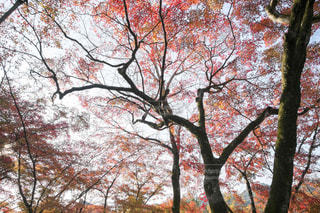 近くの木のアップの写真・画像素材[1667681]