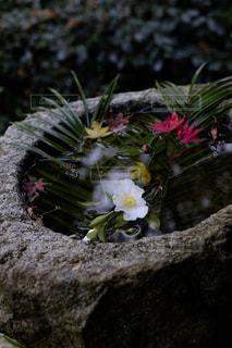 近くに植物の花のアップの写真・画像素材[1667685]
