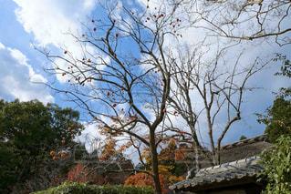 大きな木の写真・画像素材[1667691]