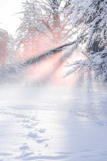 雪に覆われた木の写真・画像素材[1680599]