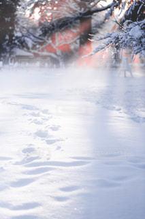 雪に覆われた斜面をスキーに乗る男の写真・画像素材[1680602]