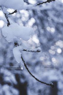 雪の木の写真・画像素材[1680605]