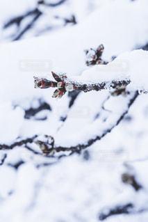 雪の上に座っている鳥覆われた斜面の写真・画像素材[1680615]
