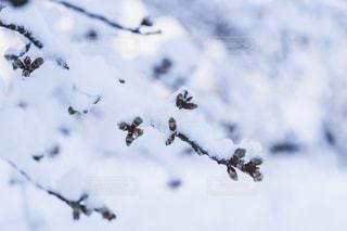 木の上に座っている鳥の群れの写真・画像素材[1680616]