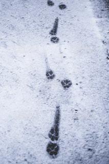 雪に覆われた斜面の写真・画像素材[1680618]