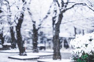 近く雪に覆われた木のアップの写真・画像素材[1680628]
