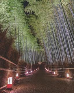 嵐山花灯路・竹林の小径の写真・画像素材[1677687]