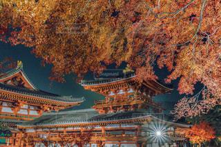 平等院鳳凰堂・夜間特別拝観ライトアップの写真・画像素材[1677705]