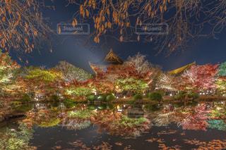 東寺・ライトアップの写真・画像素材[1677722]