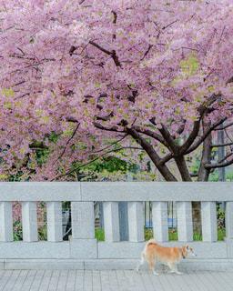 ベンチに座っている犬の写真・画像素材[1857790]