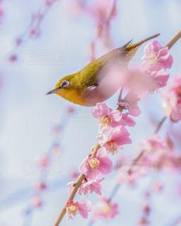 春ジローの写真・画像素材[1857802]