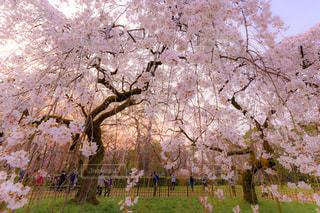 春の写真・画像素材[1875891]