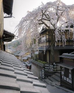 産寧坂の春の写真・画像素材[1875907]